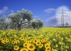 energie-rinnovabili-le-biomasse-classificazione-vantaggi-principali-impieghi