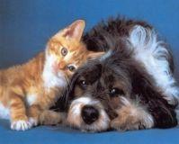 sperimentazione-animale-hanno-vinto-le-lobby-farmaceutiche